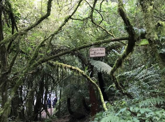 Pé da Cascata Explorer - Foto 8 de 1