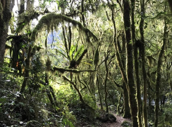 Pé da Cascata Explorer - Foto 2 de 1