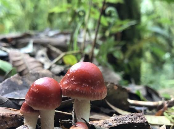 Pé da Cascata Explorer - Foto 13 de 1