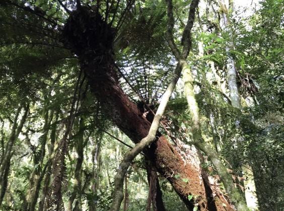 Pé da Cascata Explorer - Foto 11 de 1